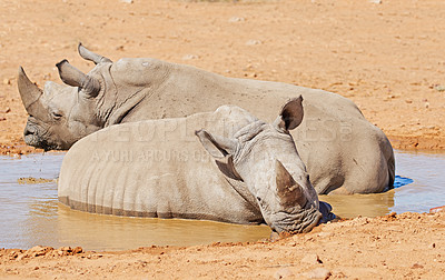Buy stock photo A photo of rhino in South Africa