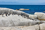 Penguins on Boulders Beach, SimonsTown