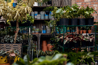 Buy stock photo Shot of an assortment of plants in a garden centre