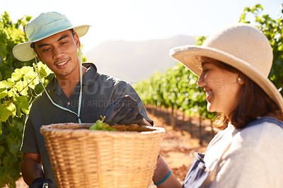 Buy stock photo Shot of a young couple picking grapes in their vineyard
