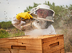 The honey making business is buzzing