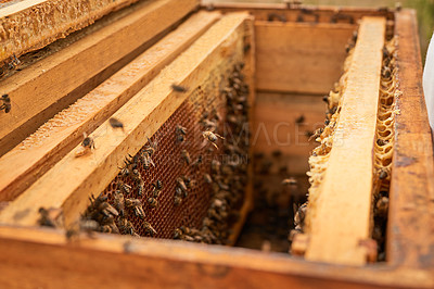 Buy stock photo Shot of an open beehive frame on a farm