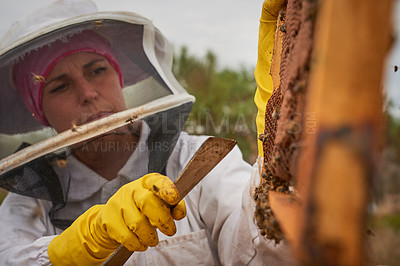 Buy stock photo Shot of a woman working with a hive frame on a farm