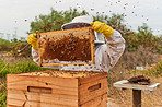 The colony is growing and the honey is flowing