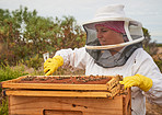 When the sun comes out, so do the bees