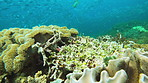 Coral reefs contain the most diverse ecosystems on the planet