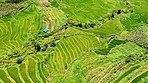 Some of the world's best rice is grown here