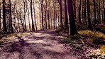 Forest in false colour