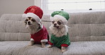 Even these furry cuties are getting into the festive spirit