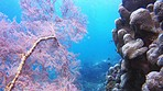 Stunning underwater scenery that'll leave anyone speechless